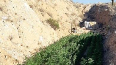 Photo of צאלים: חייל הלך לשירותים וגילה שדה קנאביס בטעות
