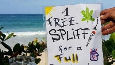Photo of ג'מייקה: נקה את חוף הים – קבל ג'וינט בחינם