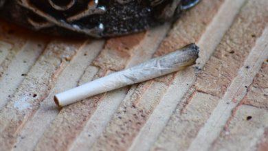 Photo of האם מריחואנה מובילה לשימוש בסמים קשים (סם שער / סם מעבר)?