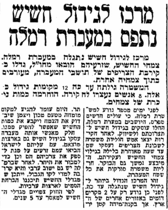 צמחי קנאביס רבים התגלו במעברת רמלה (עיתון 'מעריב', 16.8.1954)