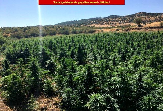 Turkey Marijuana Field