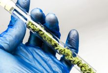 Photo of סכנה: בדיקות סמים נפוצות לא מבדילות בין THC ל-CBD
