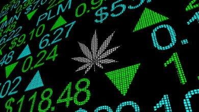 Photo of שבוע ירוק בבורסת הקנאביס, מהומה בהנפקת מניות פנאקסיה
