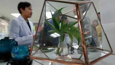 Photo of תאילנד תאשר לאזרחים לגדל קנאביס כדי למכור אותו למדינה