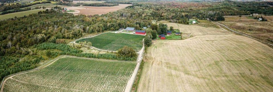 שדה הגידול של חברת 'אליפיה' הקנדית - 10 טון בעלות של 10 סנט לגרם