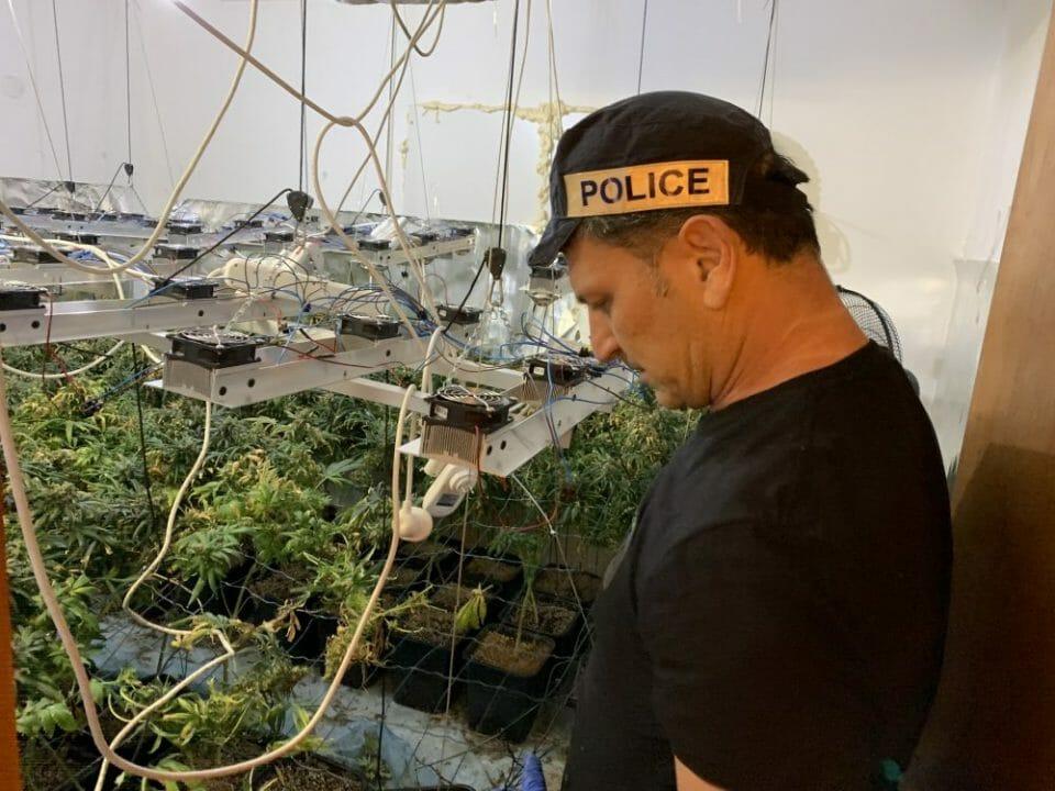 תפיסת משטרה קנאביס 1,000 שתילים עפולה