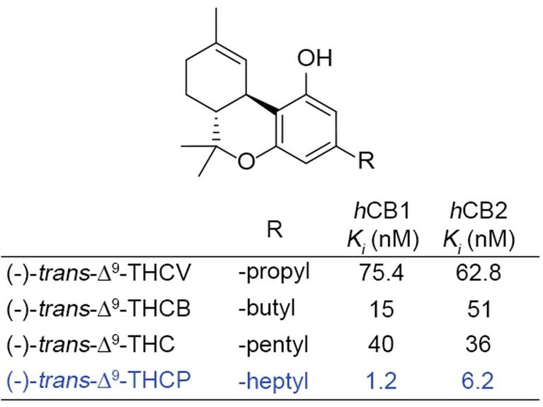 המולקולה THCP והשוואה של עוצמת ההיקשרות שלה לשני הקולטנים הקנבינואידים ביחס לזו של פייטוקנבינואידים אחרים
