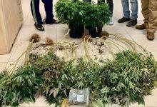 "Photo of המשטרה תפסה 8 צמחי קנאביס בדירה בת""א: ""נגיע לכולם"""