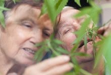 Photo of איך לטפל בקשישים עם קנאביס? אונ' בן גוריון פיתחה פרוטוקול