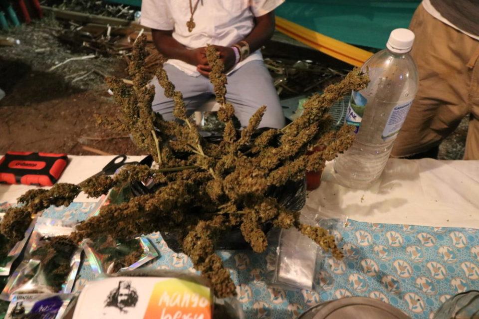 פרחי קנאביס ביריד בג'מייקה