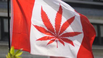 """Photo of קנדה לאו""""ם: הלגליזציה פגעה בארגוני הפשע, אין עלייה בשימוש"""