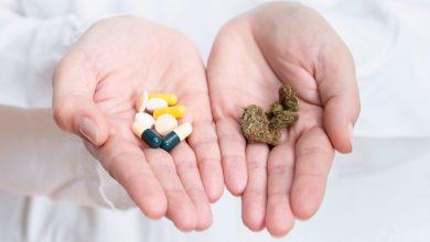 רופאה מחזיקה בידיים קנאביס מול תרופות