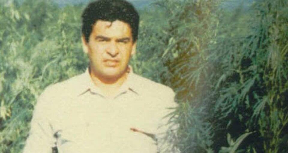"""סוכן ה-DEA האמריקני אנריקה 'קיקי' קמרנה, מצולם ב-1984 בין צמחי הקנאביס בפשיטה על השדה הענק ב'רנצ'ו באפלו' שאותר בזכותו. קמרנה נחטף, עונה, ונרצח ע""""י קרטל גוודלחרה כמה חודשים לאחר שתמונה זו צולמה"""