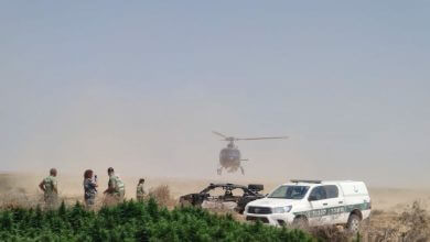 Photo of בסיוע מסוק: 15,000 צמחי קנאביס ב-23 חממות נחשפו בדרום