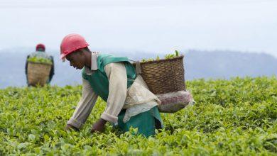 שדה רואנדה חקלאי
