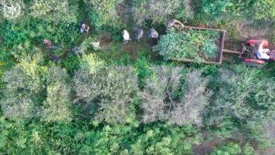Photo of בסיוע רחפן: 2,000 שתילי קנאביס נחשפו בין שורות עצים בשרון