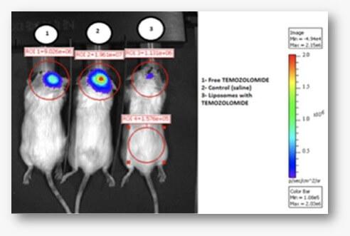 מחקר על עכברים, טכנולוגיה חדשה - קנאביס למוח
