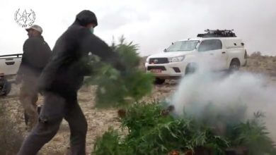 "Photo of המשטרה: ""הושלם מיפוי האזורים לגידול קנאביס לא חוקי בנגב"""