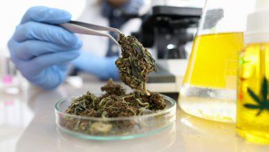 בדיקת קנאביס מעבדה THC