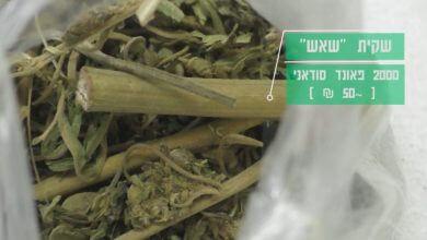 תפזורת שאש, קנאביס אתיופי